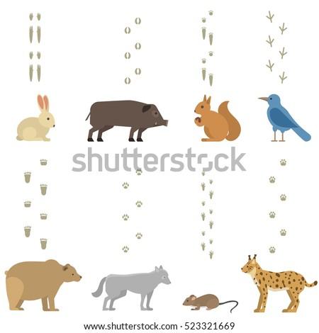 animals steps vector set