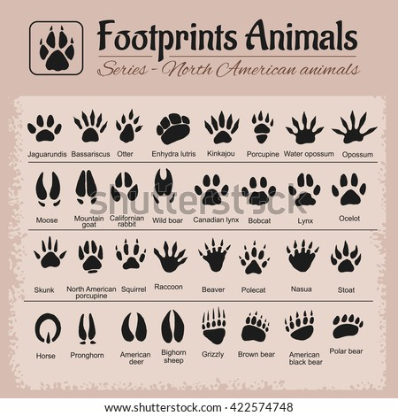 animals tracks   north american