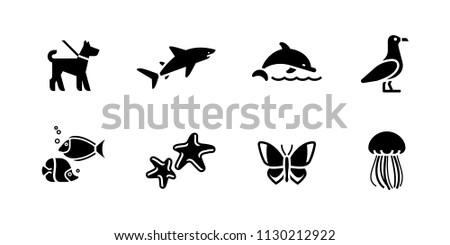 animals  water fauna nature