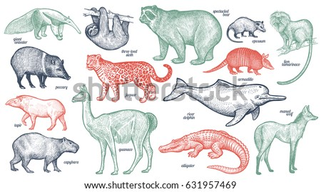 animals with names set. bear ...