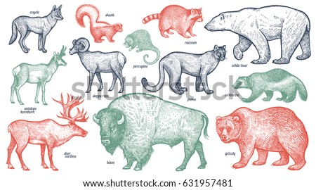 animals with names set polar