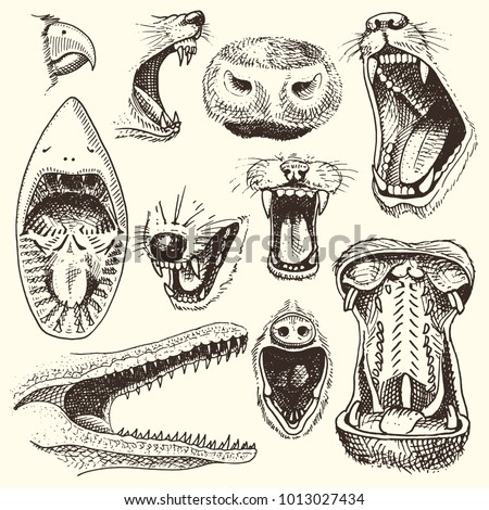 Animals with open mouth vector heads of roaring animals angry lion or crocodile and aggressive shark illustration set of animalistic beast with teeth isolated on white background