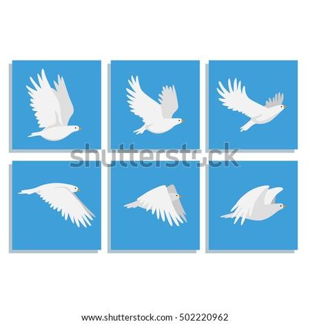 animation bird flies