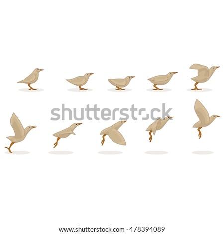 animation bird flight