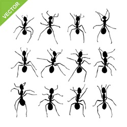 Ant silhouettes vector