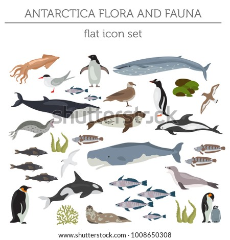 antarctic  antarctica flora and