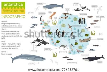 antarctic  antarctica   flora