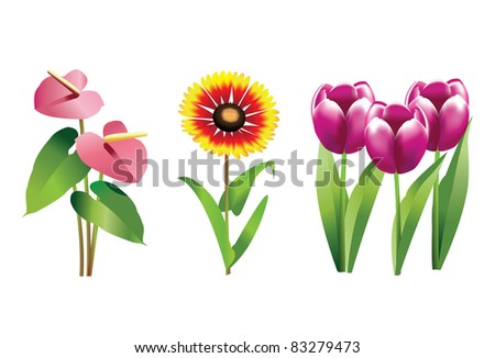 Anthurium, Blanketflower and Tulip plants with flowers