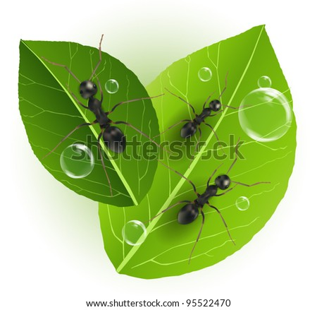 Ants on Green Leaf