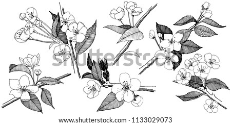 apple flowers in a vector style