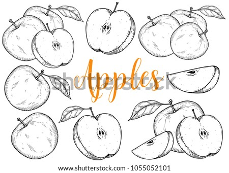 Apple fruit vector set. Engraved organic food hand drawn sketch engraving illustration. Black white apple isolated on white background.