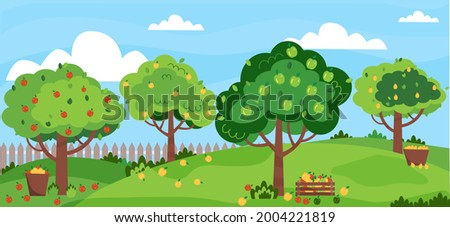 Apple garden. Summer orchard with apple trees. Green, red, yellow apples. Apple harvest, baskets with fruits. Vector illustration, flat style.