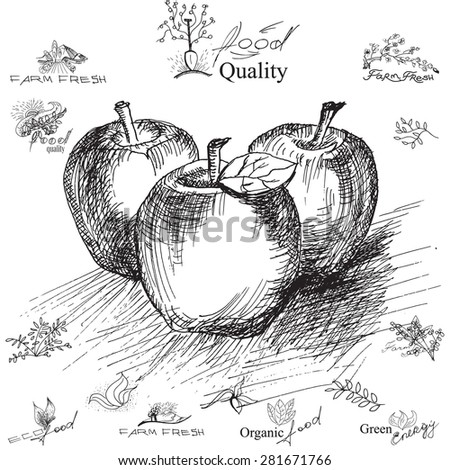 Apple.  Hand-drawing,  illustration for printing, banner, website. Black and white ink drawing