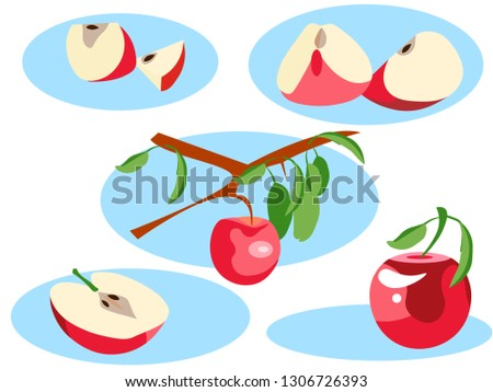 Apple in different portions. Whole, grows on a tree, half and slice. In minimalist style. Flat isometric vector illustration