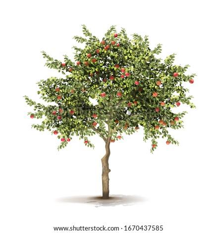 Apple tree. Ripe fruits on a tree. Vector illustration. Stock foto ©