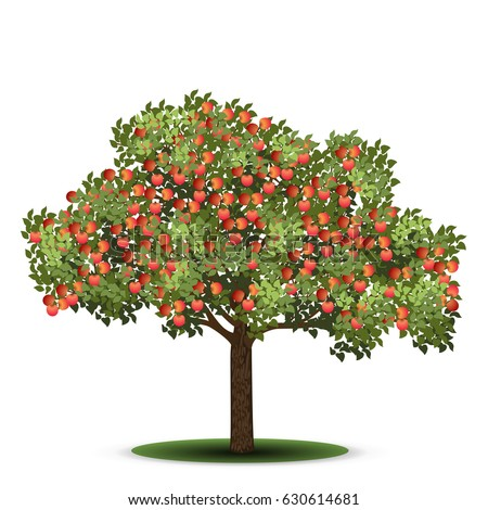 apple tree with red fruits on a