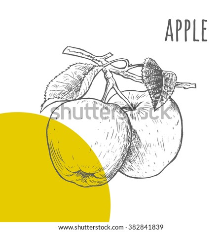 apple vector freehand pencil