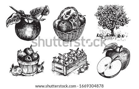 Apples in a basket, apples in a box, Apple on a twig , half an Apple, an Apple with a leaf, Appletree. Vector graphics for labels, menus or packaging design.