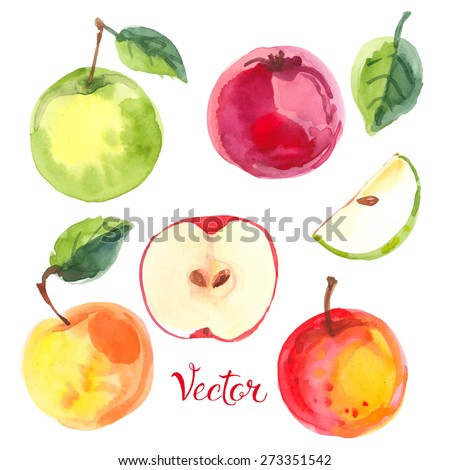 apples painted with watercolors