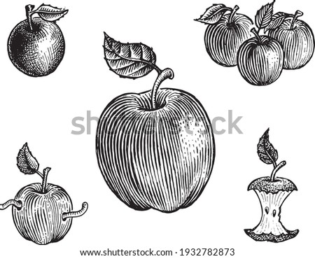Apples, vector illustration. Vintage graphics and handwork. Drawing with an ink pen and pencil. The Apples with leaves, big apple, apple with a worm, apple core. A collection of fruits and berries.