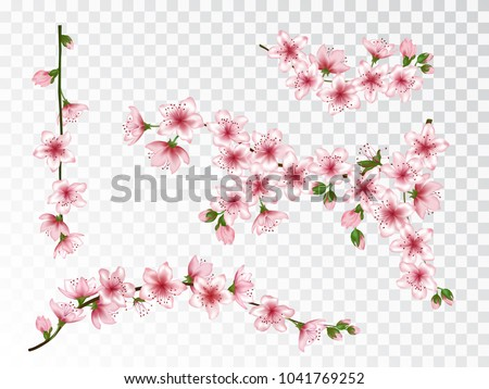 Apricot blossom branches set vector illustration. Blooming twigs isolated, springtime tree flower blossoms floral design. Gentle spring flowering trees branches vector collection.
