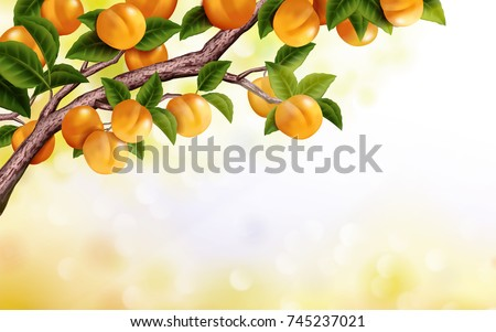 apricot orchard background