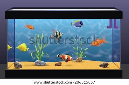 Shutterstock Aquarium