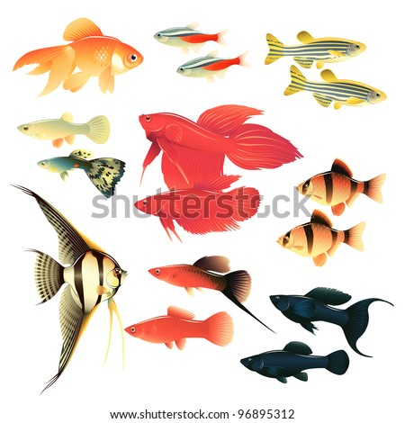 aquarium fishes  great