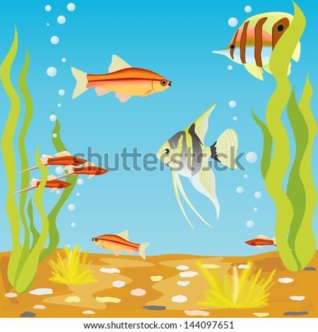 aquarium fishes in their