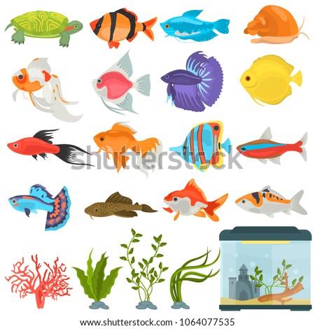aquarium flora and fauna color