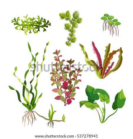aquarium plants set cartoon