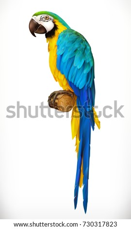 Ara parrot. Macaw. Photo realistic 3d vector icon.
