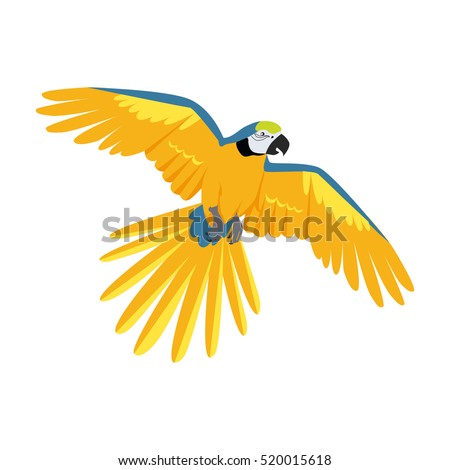 ara parrot vector birds of