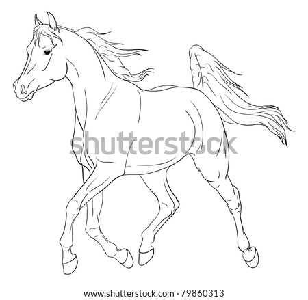 Arabian horse vector illustration