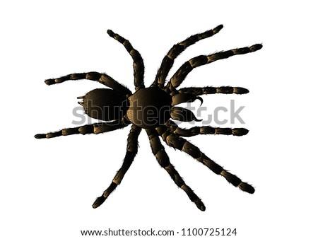 arachnid spider tarantula vector