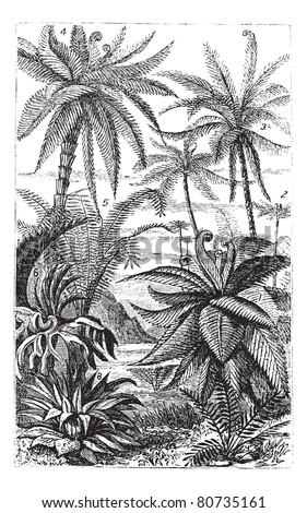 Arborescent Ferns during the Carboniferous Period, vintage engraved illustration. Trousset encyclopedia (1886 - 1891).