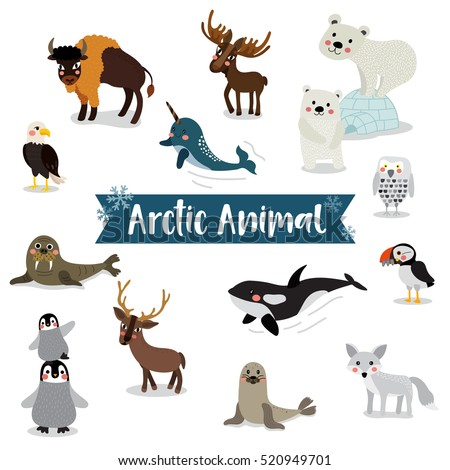 arctic animals cartoon on white