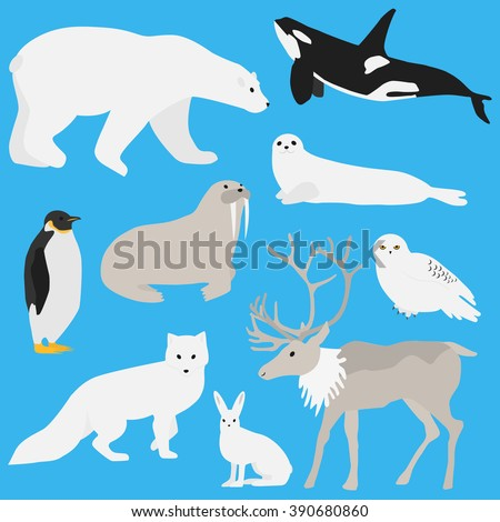 arctic animals collectionset