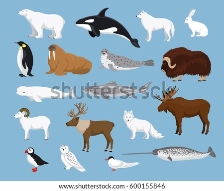 arctic animals collection with