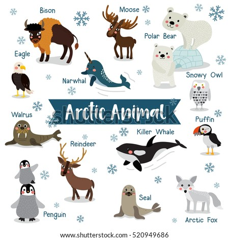 Arctic creature cartoon on white background with animal name.