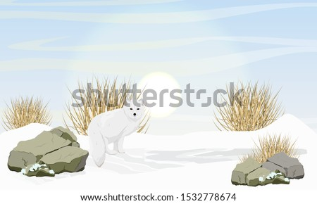 arctic fox stands in the snow