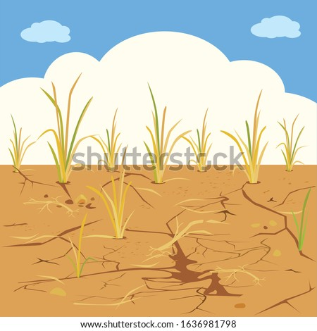 Arid - vector of dried fields rice. Photo stock ©