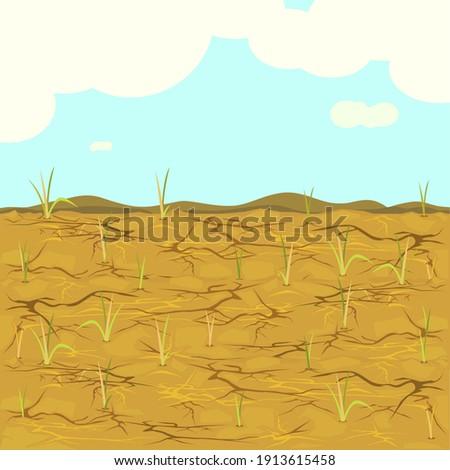 Arid - vector of dried fields rice. Photo stock ©