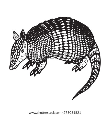 Armadillo hand drawn vector illustration in black and white