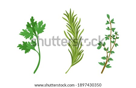 Aromatic Herbs with Parsley and Rosemary for Flavoring and Garnishing Food Vector Set Stock photo ©