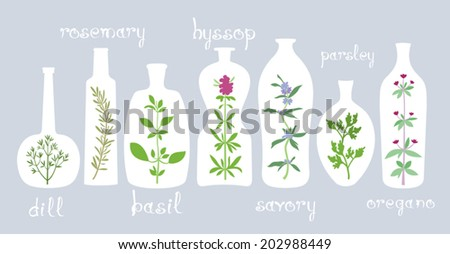 Aromatic Plants in Bottles. Different bottles with various aromatic herbs. Some hand drawn text. Isolated design elements for cooking or homeopathic ideas. Vector file  EPS8.