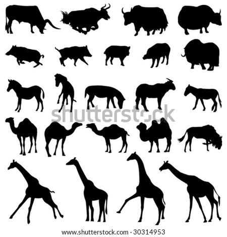 Around the world herbivores