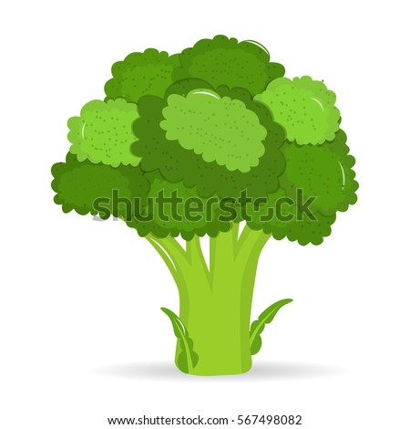 Artistic hand drawn broccoli illustration. Watercolor vegetable broccoli closeup isolated on a white background. Hand painting on paper