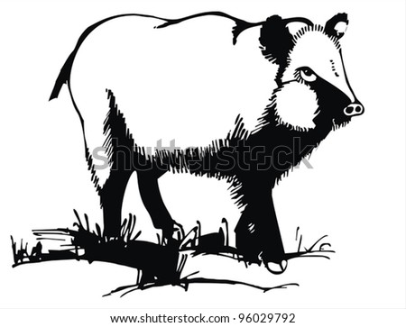 artistic sketch - wood wild boar on the grass - vector drawing - stock    Wild Boar Sketch