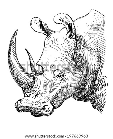 artwork rhinoceros  sketch